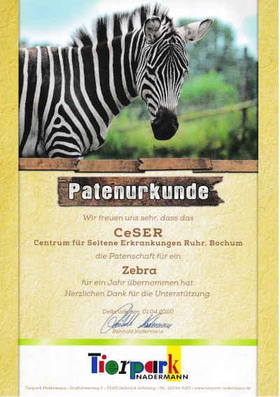 Das CeSER übernimmt Tierpatenschaft für ein Zebra aus dem Tierpark Nadermann